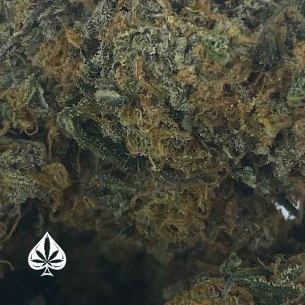 BLACKBERRY PLATINUM - INDICA DOMINANT HYBRID (AAA)