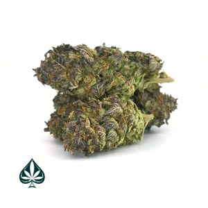Buy THIN MINT GIRLS SCOUT COOKIES - HYBRID (AAA+)