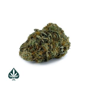 ACE OF SPADES - INDICA DOMINANT HYBRID (AAA+)