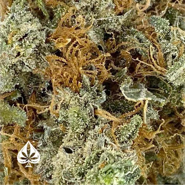 Buy STRAWBERRY CHEESECAKE CRAFT BY GAS DEMON - INDICA DOMINANT HYBRID (AAAA)