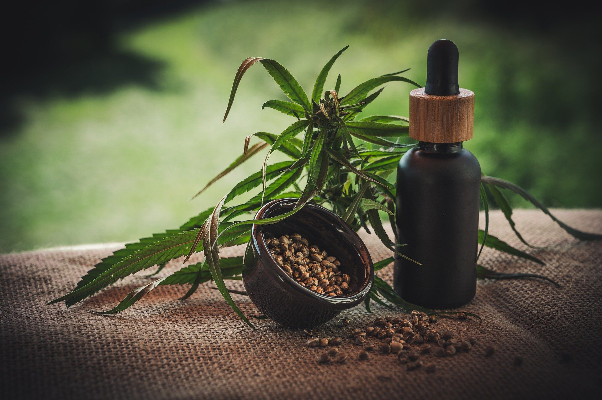 cannabis edibles CBD