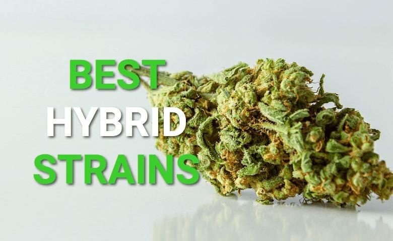 hybrid cannabis strains