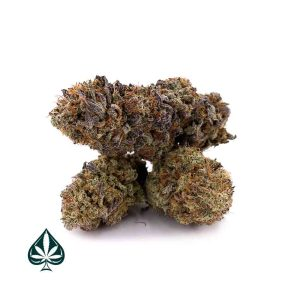 DO-SI-DOS By Gas Demon- BALANCED HYBRID - AAAA