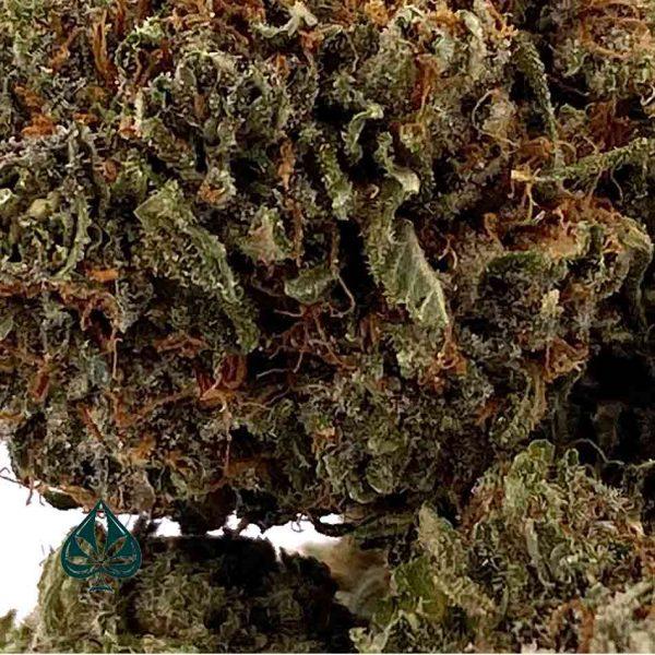 GREEN CRACK - BALANCED HYBRID - AAA