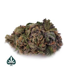 PURPLE DREAM - BALANCED HYRBID - AAA