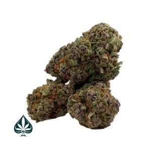Buy Purple Lavender - Balanced Hyrbid - AAA+