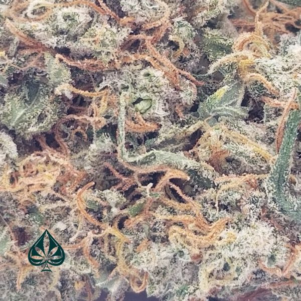 Buy Clementine Craft by Gas Demon - Hybrid - AAAA