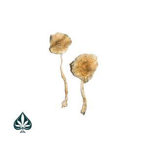 Buy Cuban Magic Mushrooms Online