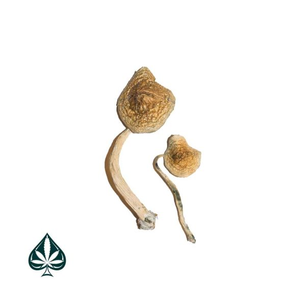 Buy Cuban Magic Mushrooms Online