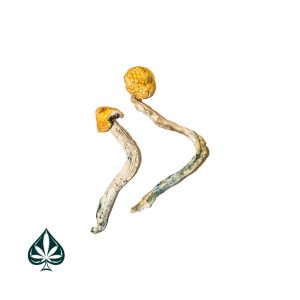 Buy Ecuadorian Magic Mushrooms Online