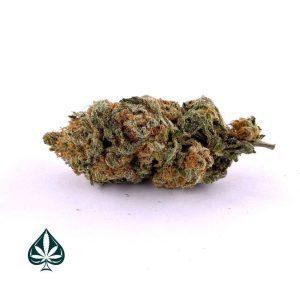 Buy Silver Haze Sativa AAA Online