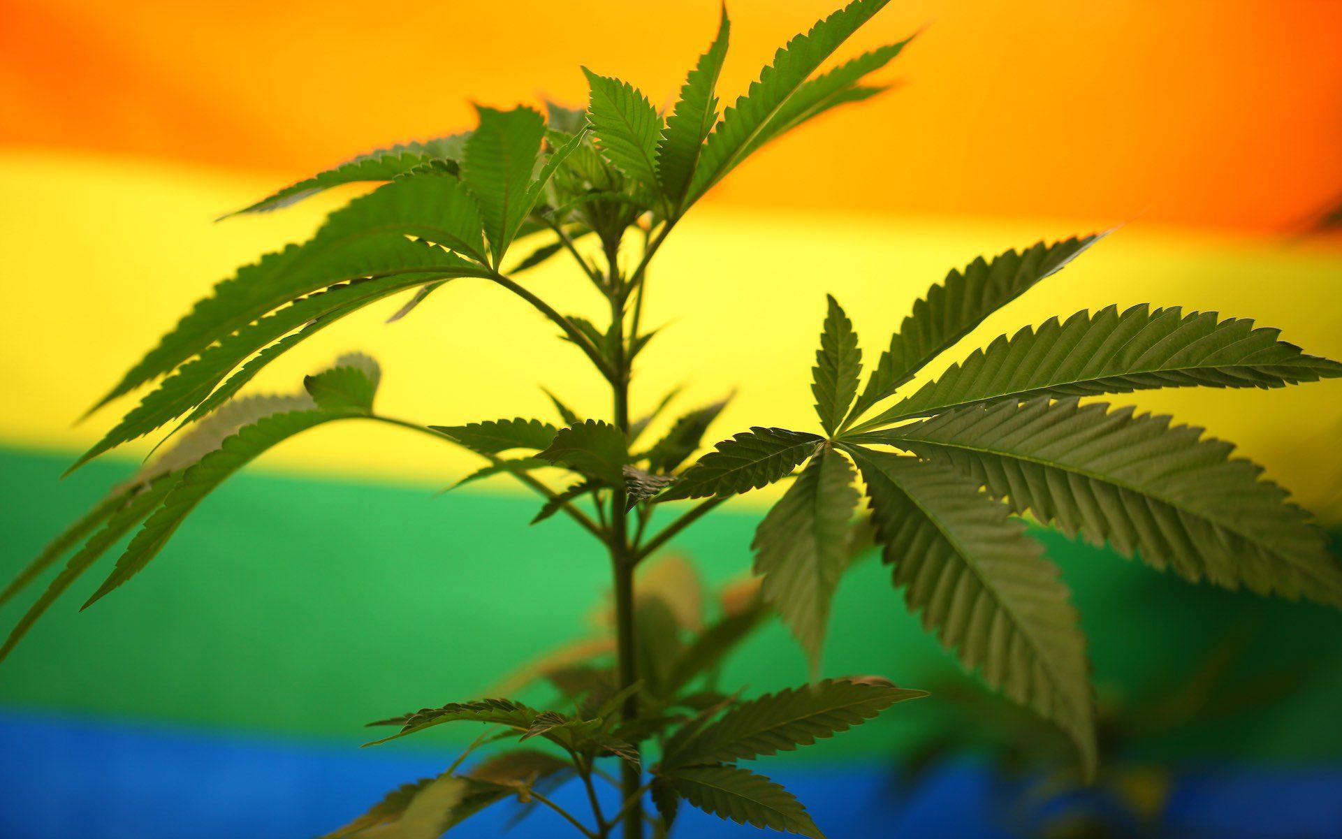 weed strains to celebrate pride