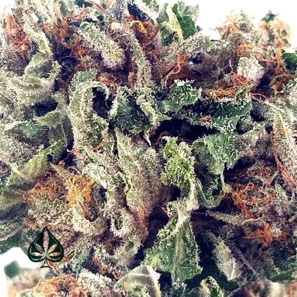Buy Purple Kush Cannabis AAA Online