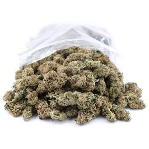 Buy Gorilla Glue #4 Bulk
