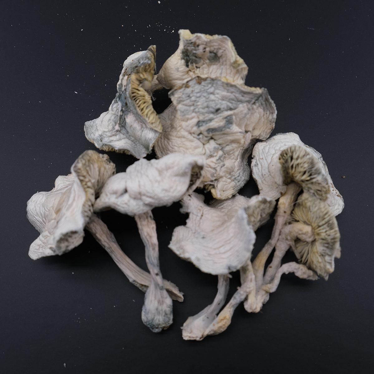 Avery Albino Mushroom